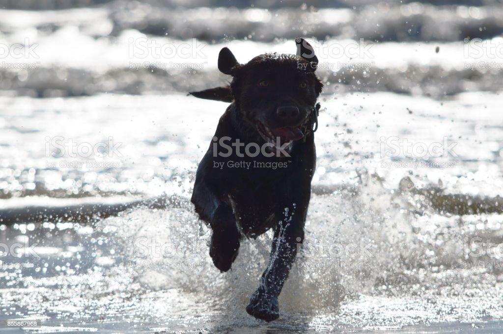 Perro Corriendo – Foto