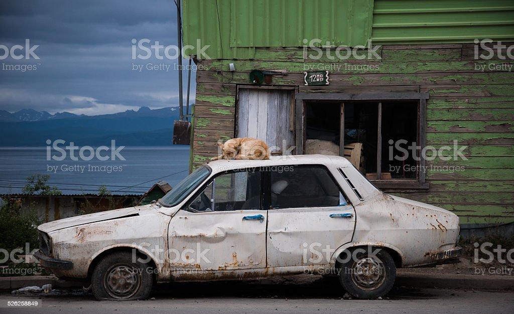 perro durmiendo en un carro viejo - foto de stock