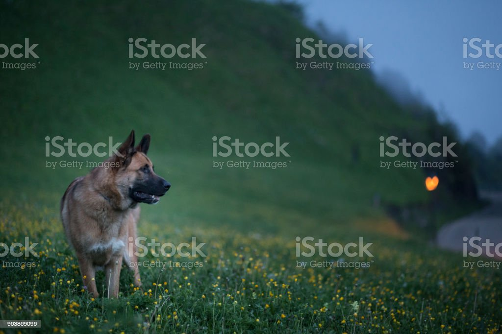 Perro en paisaje rural - Royalty-free Animal Stock Photo
