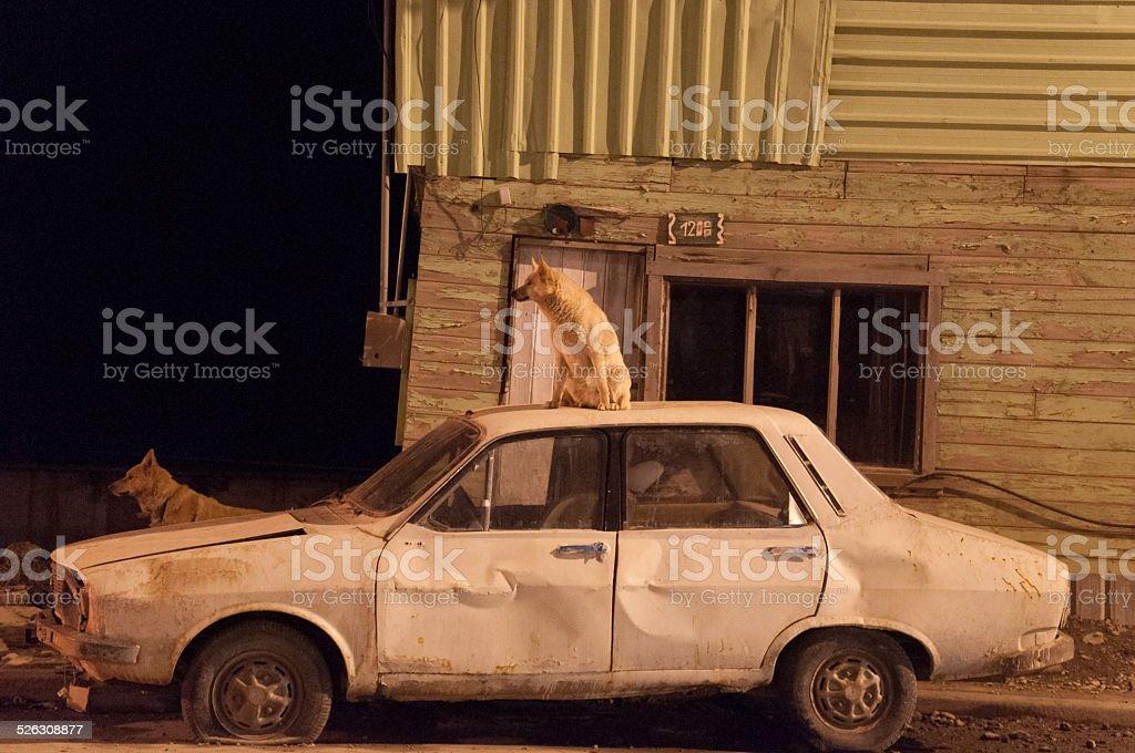 perro sentado en un carro viejo - foto de stock