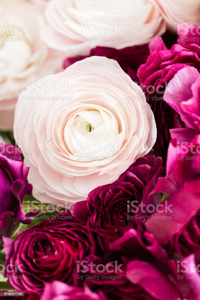 Bunch colorful and pale pink ranunculus flowers light background. Glass vase on : flower light vase - startupinsights.org