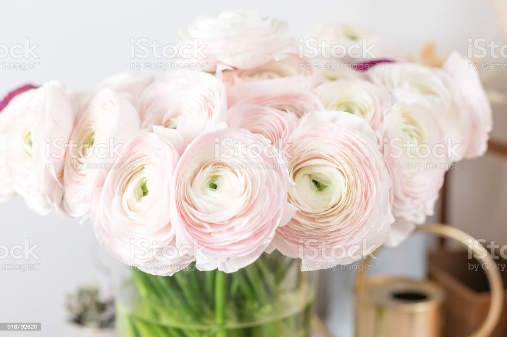 Persische Butterblume. Haufen blass rosa Ranunkeln Blumen heller Hintergrund. Glas-Vase auf rosa Vintage Holztisch. Tapete – Foto