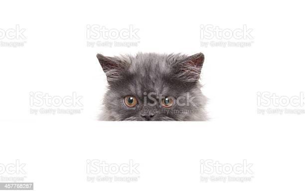 Persian cat picture id457768287?b=1&k=6&m=457768287&s=612x612&h=i8wrfukvukuhybrm0qt7vbtu5lwrlcfqem4hqa8anc4=