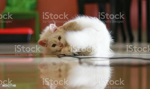 Kot Perski - zdjęcia stockowe i więcej obrazów 2015