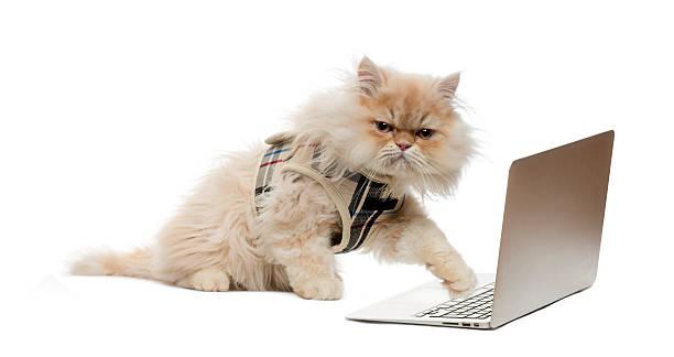 Persian pawing at a laptop picture id526664033?b=1&k=6&m=526664033&s=612x612&w=0&h=iuzbvusn2wqx4mo1ucmfsi3eyf4zoj3j8fillux q8o=