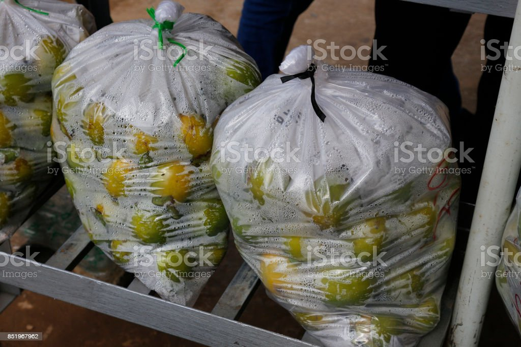 persimmon pack on pastic bag stock photo