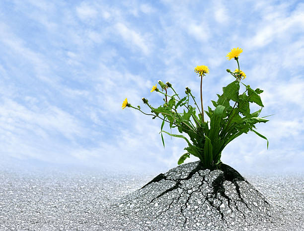 persist and succeed - resilience concept stock photos and pictures