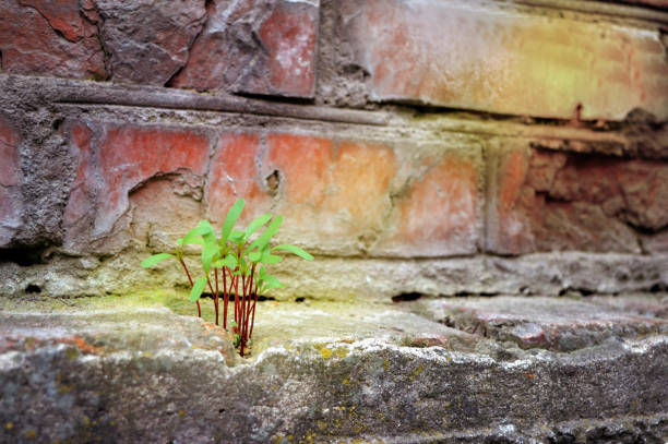 persistence, determination, survival, hope, resilience, strength, winning, force of nature. - endurance stock photos and pictures