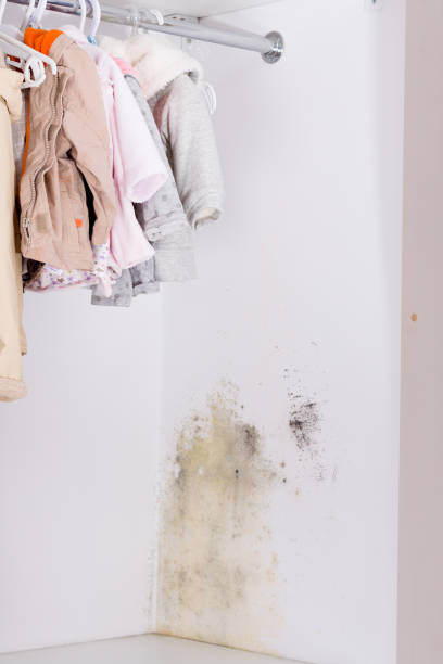 Persistent mold in wardrobe on wall and shelves. stock photo