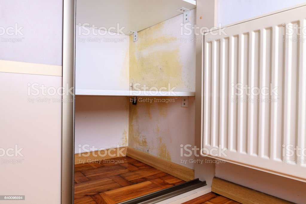 Persistent mold  on wall in wardrobe and shelves. stock photo