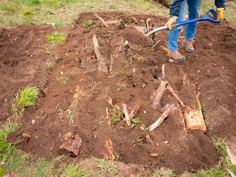 Person Adding Soils over the Logs for Hügelkultur Gardening