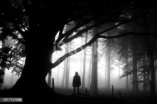A teenager walks misty woods on a foggy Autumnal day