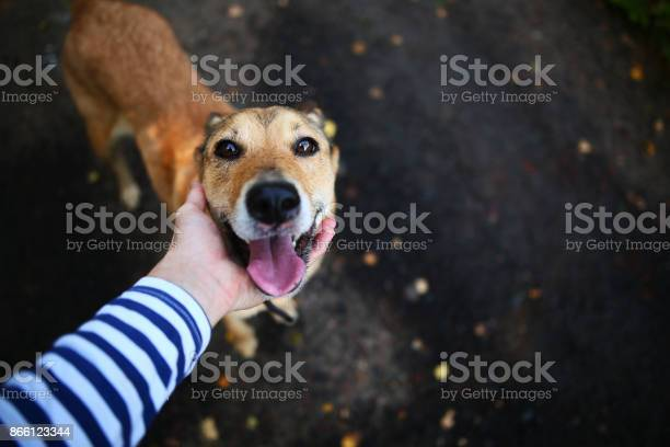 Person caressing dog picture id866123344?b=1&k=6&m=866123344&s=612x612&h=odsuwm dihr5urzr41br4ovg1v3svpnkhafz9mfsjh4=