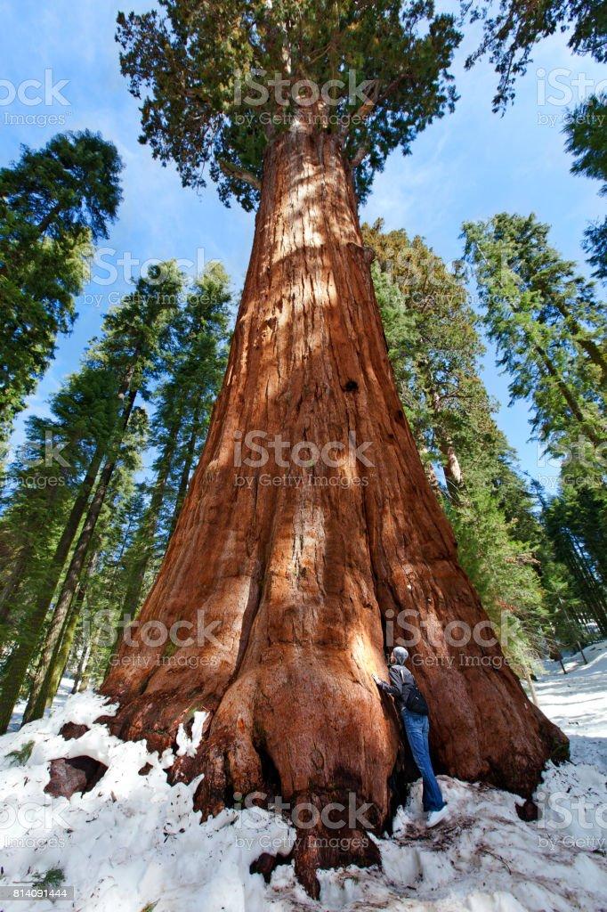 person enjoying sequoia NP stock photo