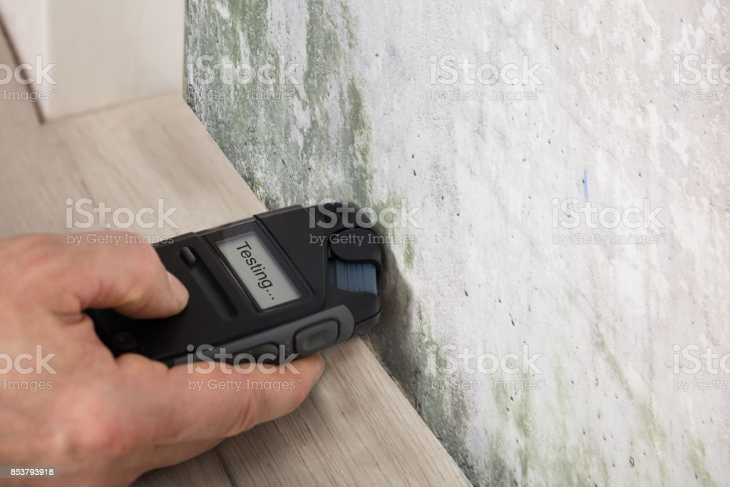 Person Hand Testing The Moldy Wall stock photo