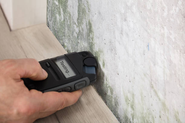 Person Hand Testing The Moldy Wall Person Hand Measuring The Wetness Off A Moldy Wall fungal mold stock pictures, royalty-free photos & images