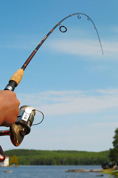 Download 161 Bent Fishing Rod Stock Photos Pictures Royalty Free Images Istock