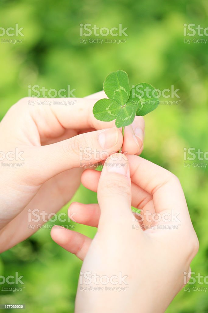 A person holding a four leaf clover stock photo