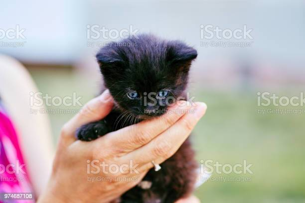 Person holding black kitten with blue eyes picture id974687108?b=1&k=6&m=974687108&s=612x612&h=umor6nrme582o3bqwokppzmdaseq9fjg7mr4kaqlyye=