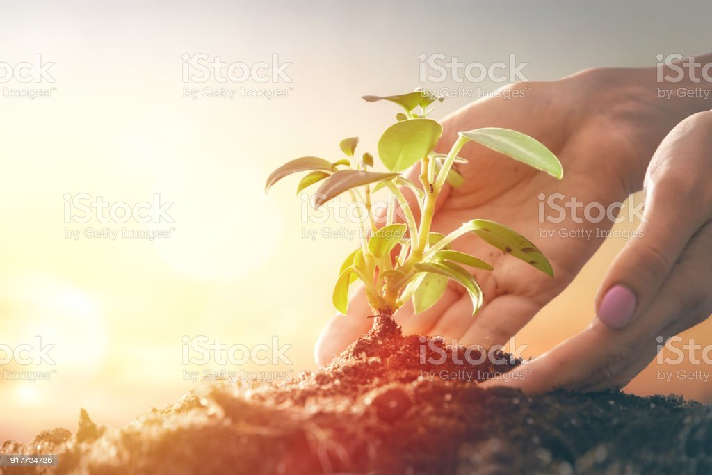 Person holding green sprout. royalty-free stock photo