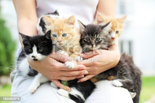 Person holding group of a little cats in arms.