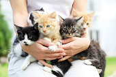 istock Person holding little cats in arms. 183384678