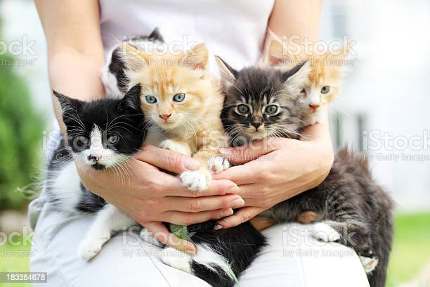 Person holding little cats in arms picture id183384678?b=1&k=6&m=183384678&s=612x612&h=jyqvwsol5xrurrhoapb1hhyv81xyh1hgj34knofbksm=