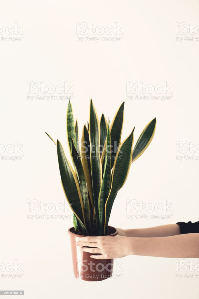 person holding potted plant stock photo