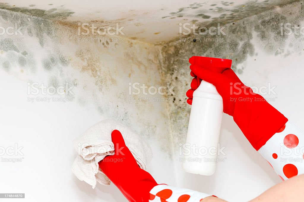 Person in gloves cleaning mold from a corner stock photo