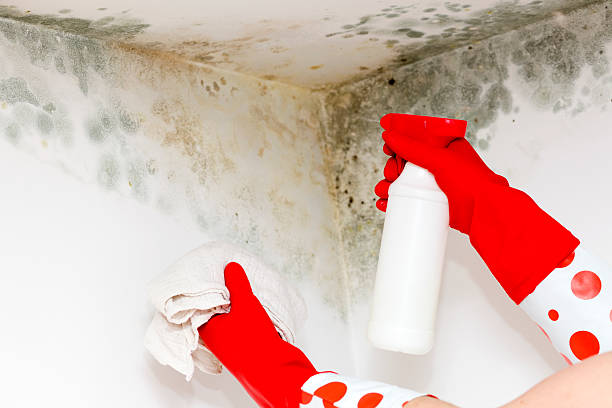Person in gloves cleaning mold from a corner fungus on the corner of the wall building feature stock pictures, royalty-free photos & images