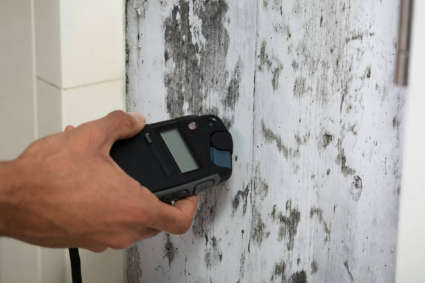 Person Measuring Wetness Of Moldy Wall Close-up Of A Person's Hand Measuring Wetness Of Moldy Wall fungal mold stock pictures, royalty-free photos & images