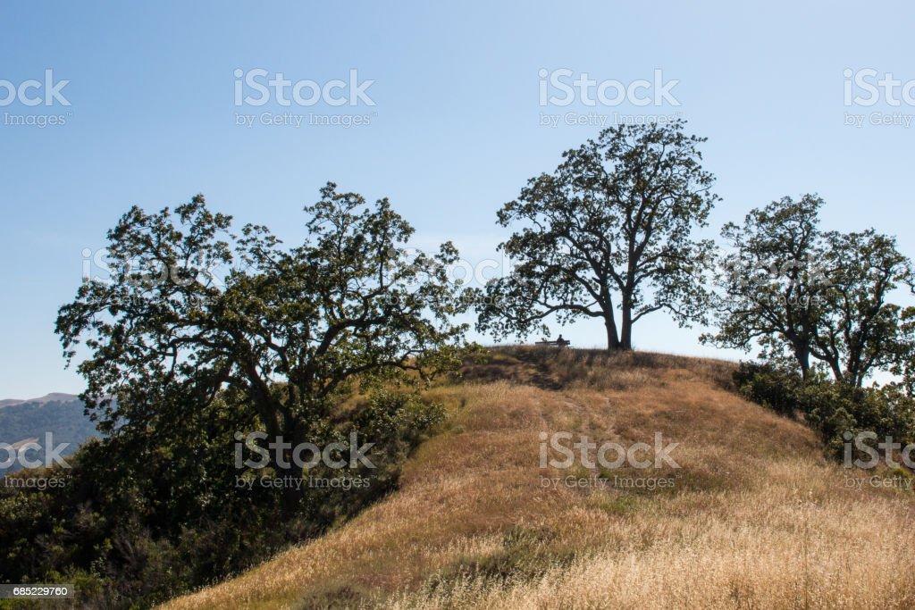 Persona en el Banco debajo de grandes árboles de roble foto de stock libre de derechos
