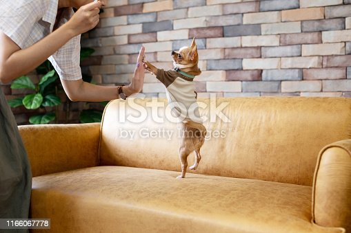 chihuahua dog watching tv or a movie sitting on a red sofa or couch  with remote control changing the channels with popcorn