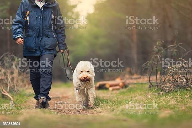 Person walking a dog in a forest picture id532865604?b=1&k=6&m=532865604&s=612x612&h=bvv teima1dd2o5rwowzgxwd emdplifgmvduqrk8vy=