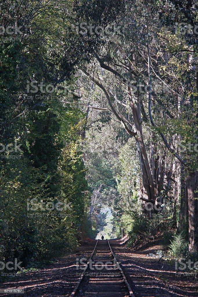Person Walking on Rail Line Under Eucalyptus Trees stock photo