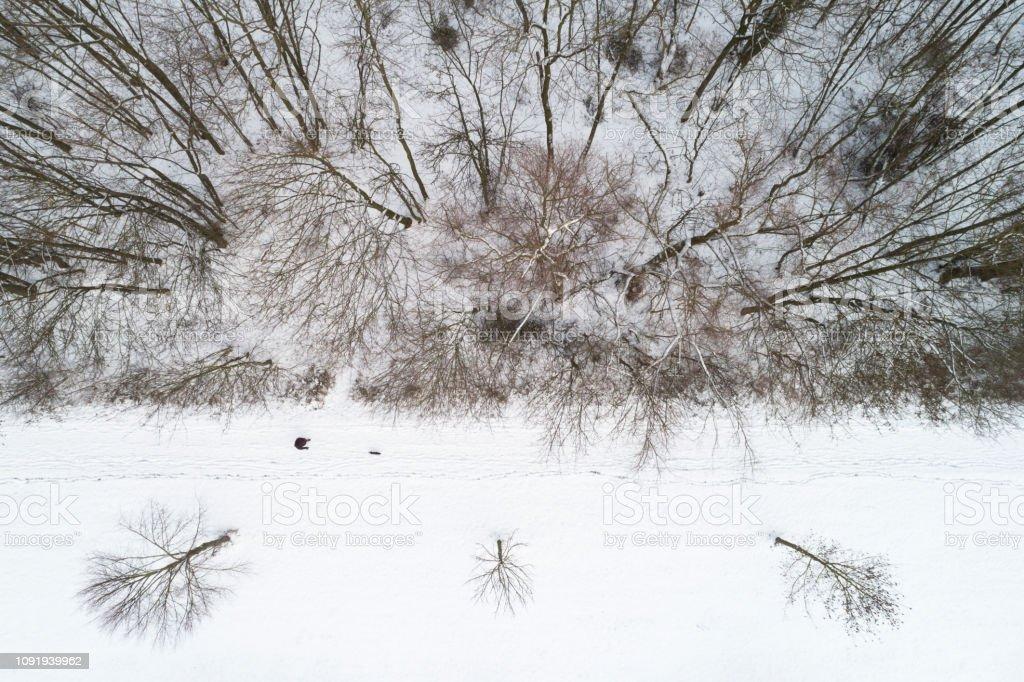 Fußgänger mit Hund Wald im Winterwald – Foto