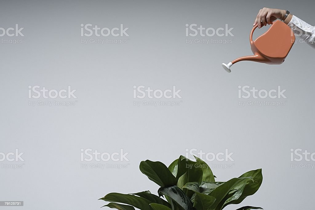 A person watering a plant royalty-free 스톡 사진
