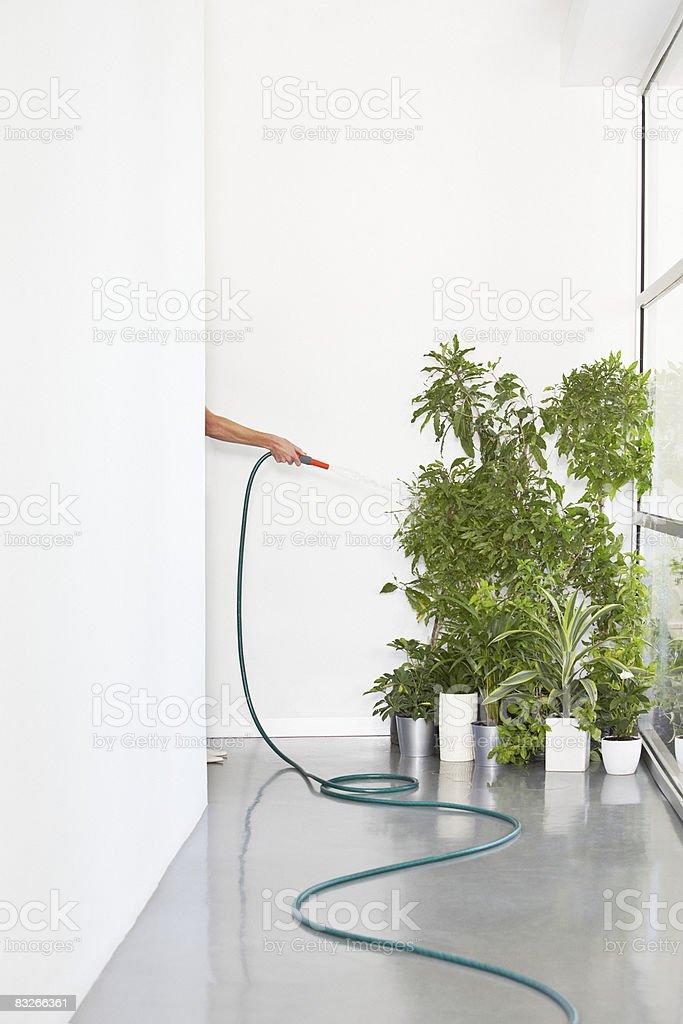 Osoba Podlewać roślin w biurze zbiór zdjęć royalty-free