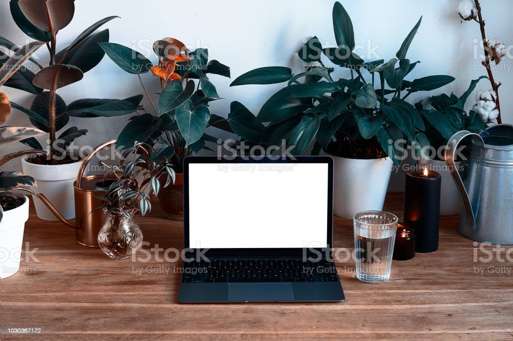 Personal modern Laptop on wooden table with beautiful green plants, hygge interior, empty space for design layout