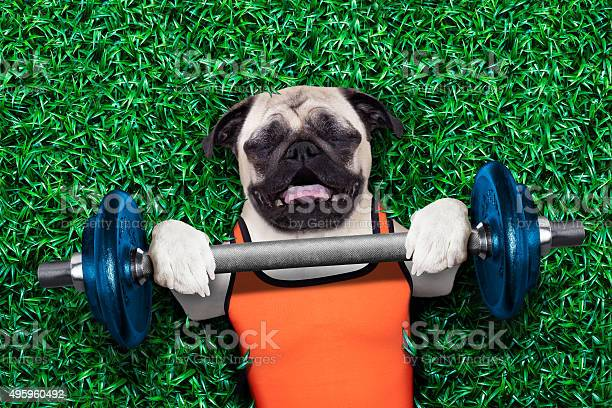 Personal trainer dog picture id495960492?b=1&k=6&m=495960492&s=612x612&h=e3oksfxkbuvo9ioemzql0hiycterzwprn8cmeerk7dy=