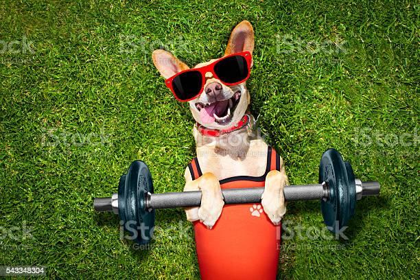 Personal trainer sport fitness dog picture id543348304?b=1&k=6&m=543348304&s=612x612&h=xhybrixmfhek6s72xu3eojnpsodr6pd2vihniflgwdm=