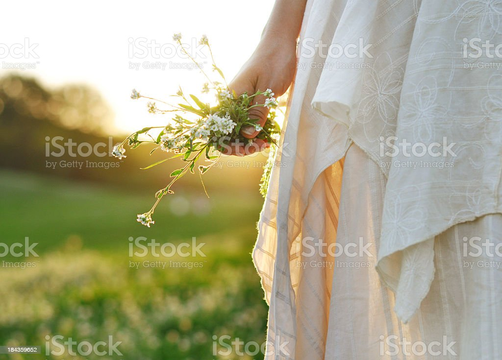Persons hand holding white flowers in field stock photo
