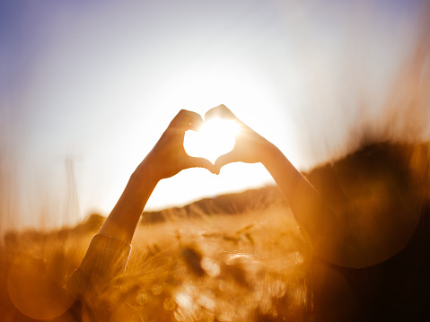 istock Person's hands over sunlit wheat field in a heart shape 491752054