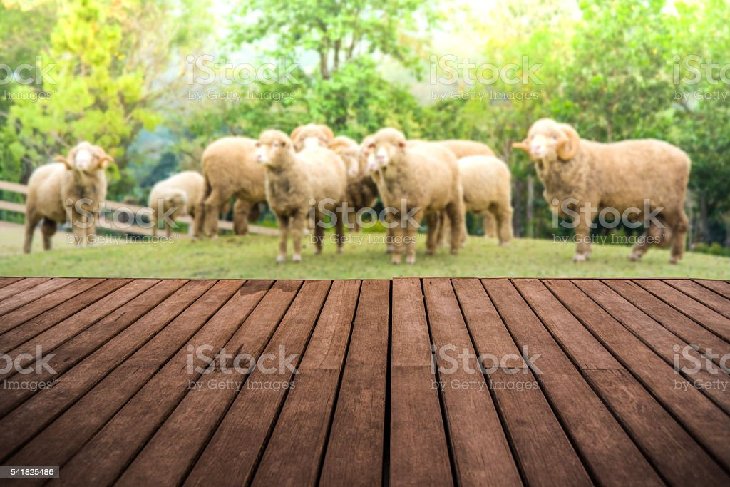 perspective empty wooden terrace with angora goat background stock photo
