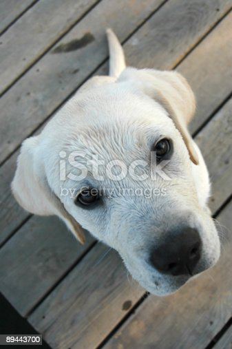 Perspective Stock Photo & More Pictures of Animal