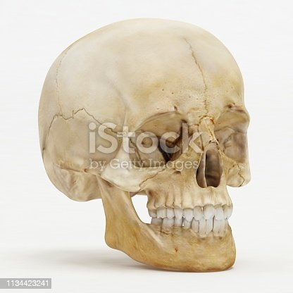 Perspective view of human skull - 3D Render