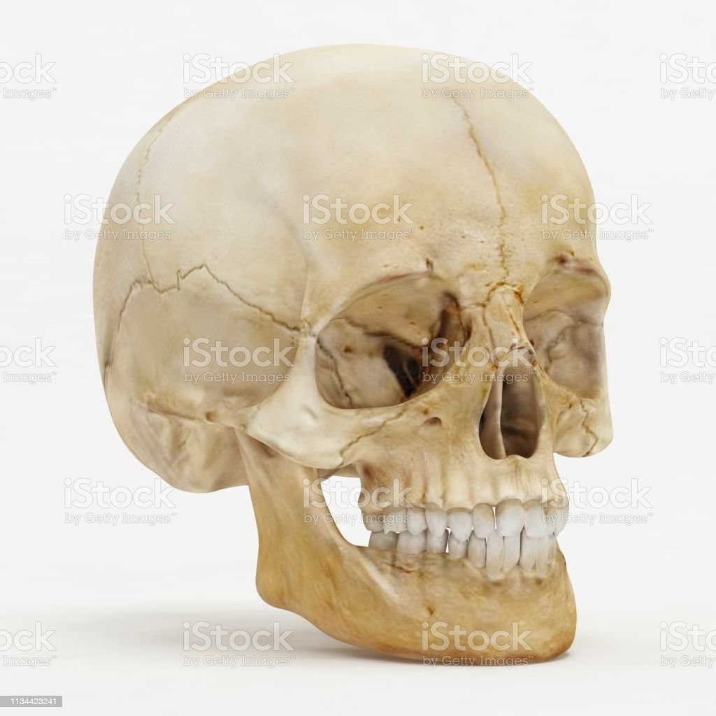 Perspective view of human skull - 3D Render stock photo