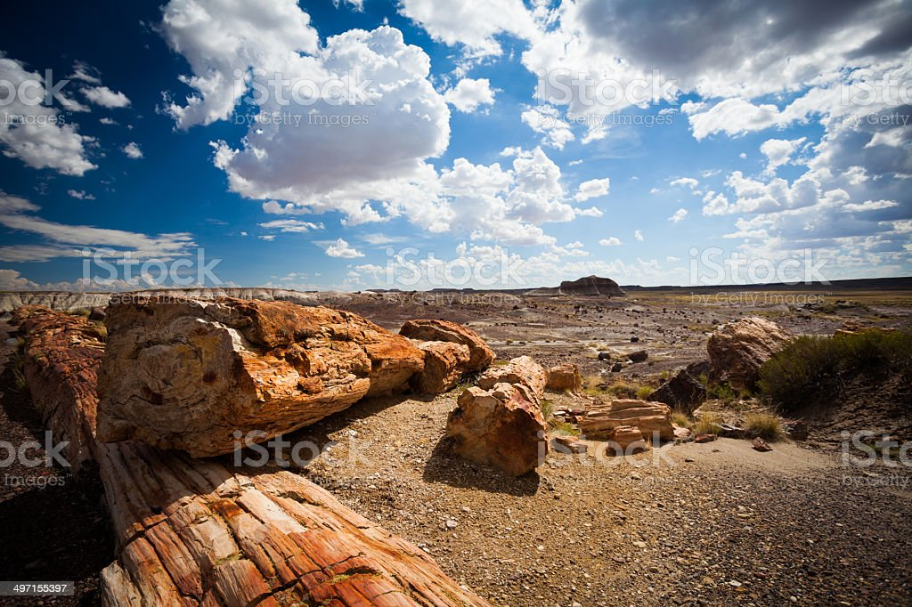 Pertified Forest Landscape, USA stock photo