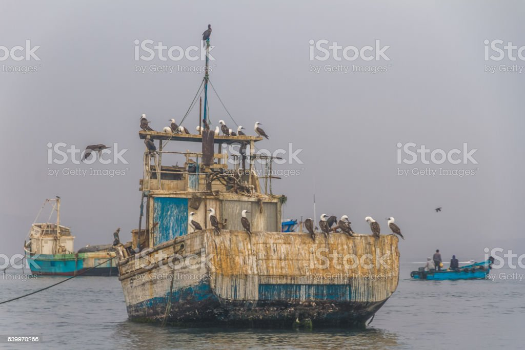 Peru, Paracas, Ballestas Islands. Biards on the old boat. stock photo