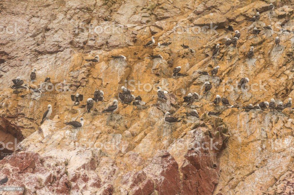 Peru, Paracas, Ballestas Islands. Birds on the rock. stock photo